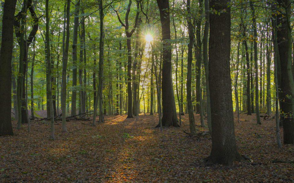 Hintergrundbild - Herbstsonne im Wald