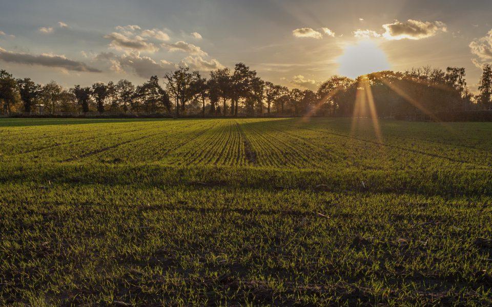 Hintergrundbild - Herbststimmung über Feldern