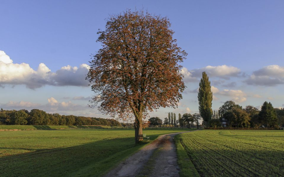 Hintergrundbild - Kastanie am Feldrand