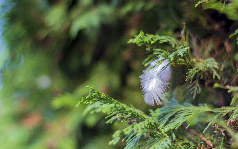 Hintergrundbild - Kleine Vogelfeder