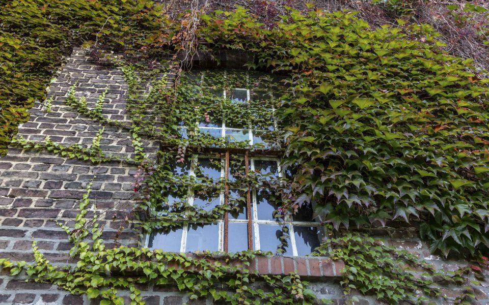 Hintergrundbild - Mühlenfenster mit wildem Wein