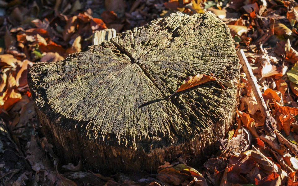 Hintergrundbild - Verwitterter Baumstumpf