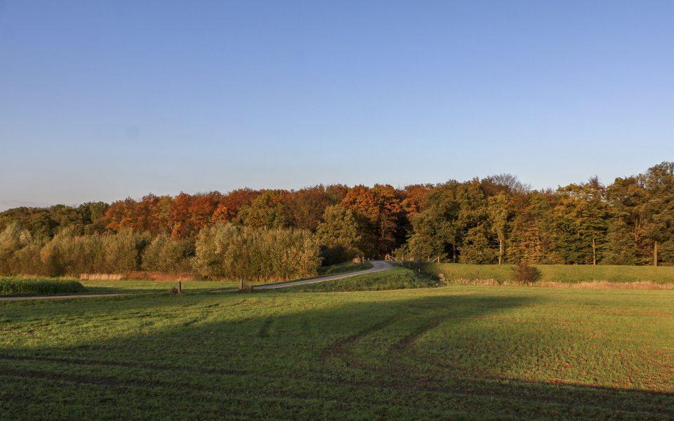 Hintergrundbild - Wald und Felder im Herbst