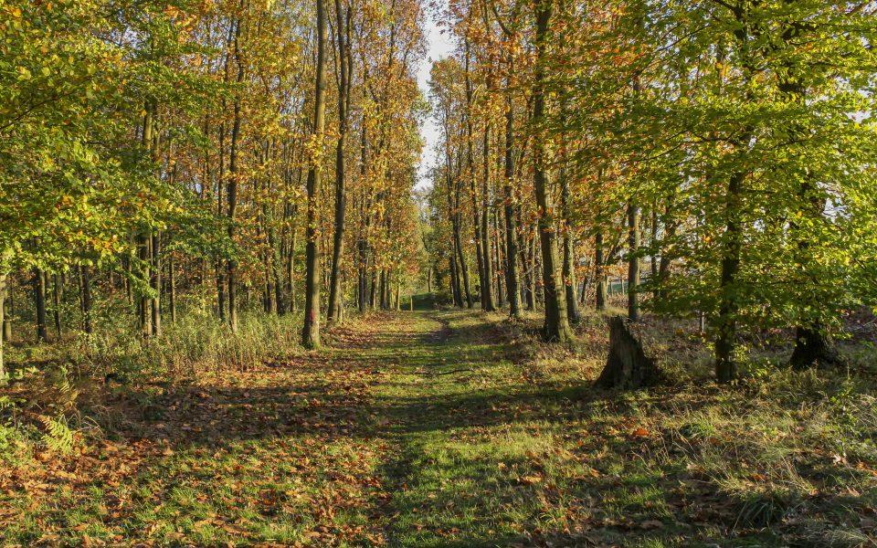 Hintergrundbild - Waldweg im Herbst