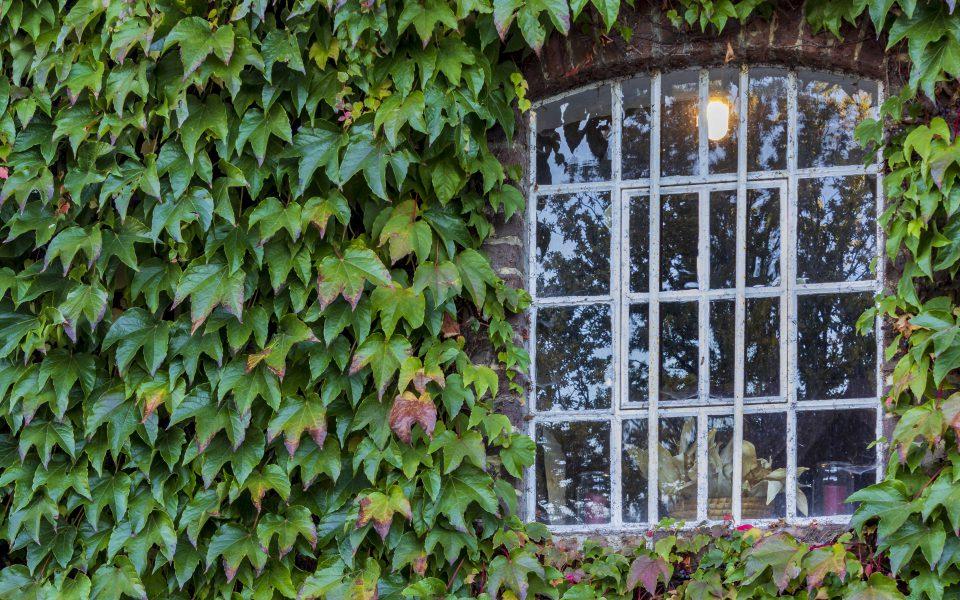 Hintergrundbild - Wilder Wein mit Mühlenfenster