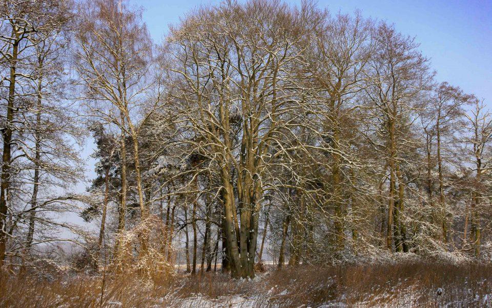 Hintergrundbild - Bäume im Hervester Bruch