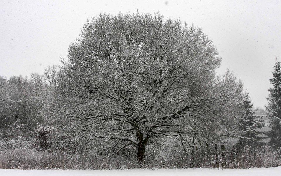 Hintergrundbild - Baum im Schneetreiben