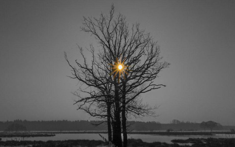Hintergrundbild - Baum im Winter Colorkey