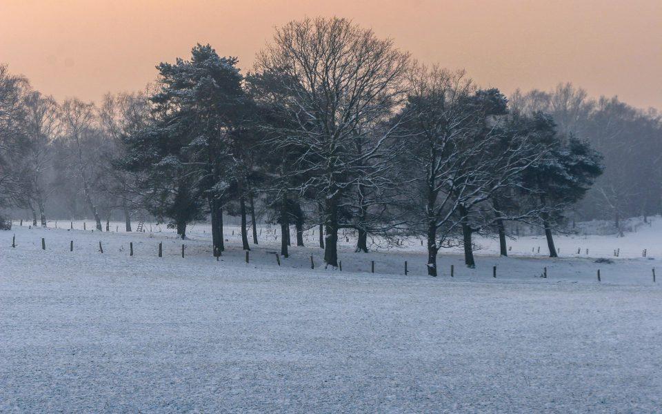 Hintergrundbild - Baumgruppe an einem Wintermorgen