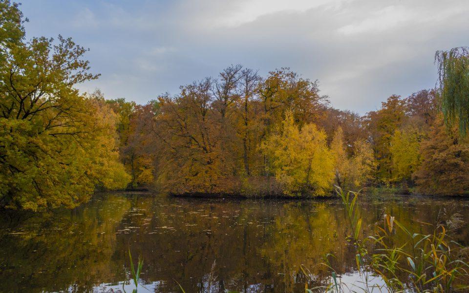Hintergrundbild - Bunte Herbstfarben