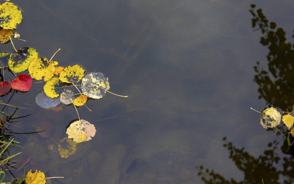 Hintergrundbild - Buntes Laub im Wasser