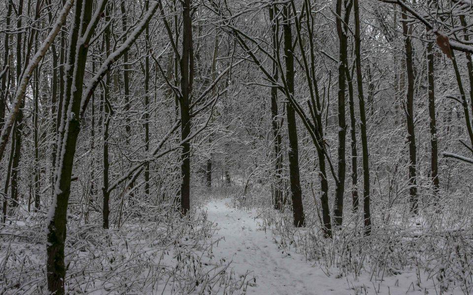 Hintergrundbild - Durch den verschneiten Wald