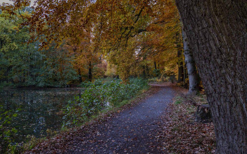 Hintergrundbild - Herbst am Mühlenbach
