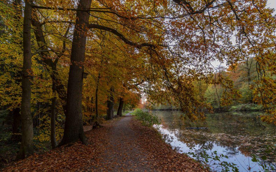 Hintergrundbild - Herbst im Schlosspark