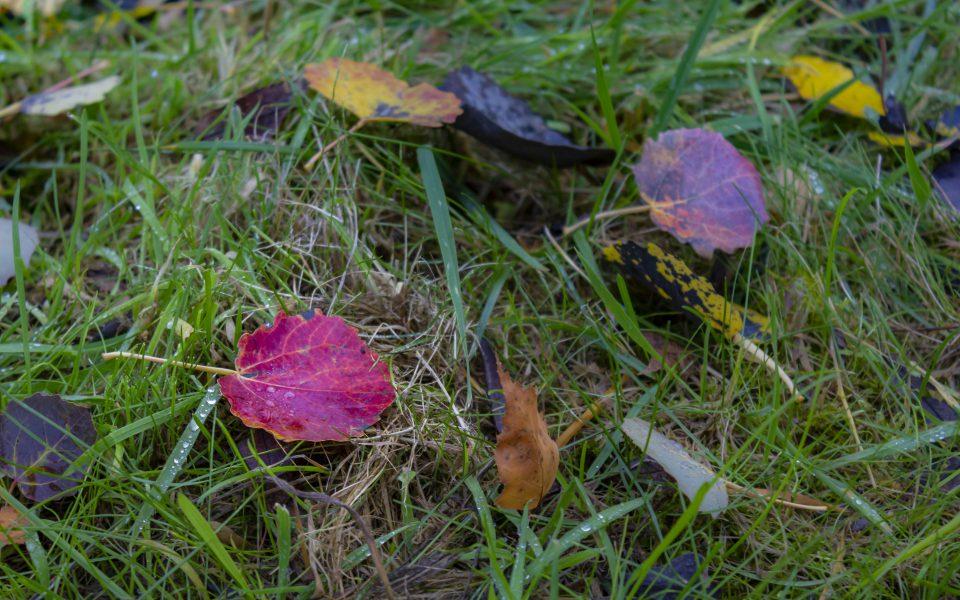 Hintergrundbild - Rotes Blatt im Herbst