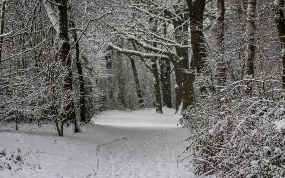 Hintergrundbild - Schneetreiben im Wald