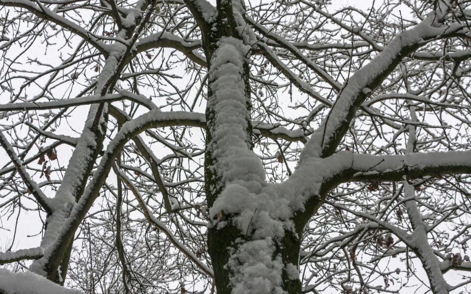 Hintergrundbild - Verschneite Baumkrone