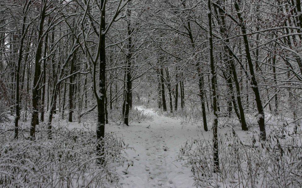 Hintergrundbild - Verschneiter Waldweg