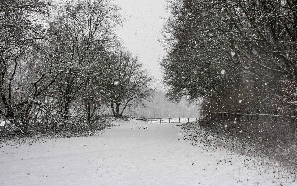 Hintergrundbild - Verschneiter Weg 1