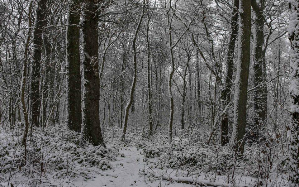 Hintergrundbild - Weg durch verschneiten Wald