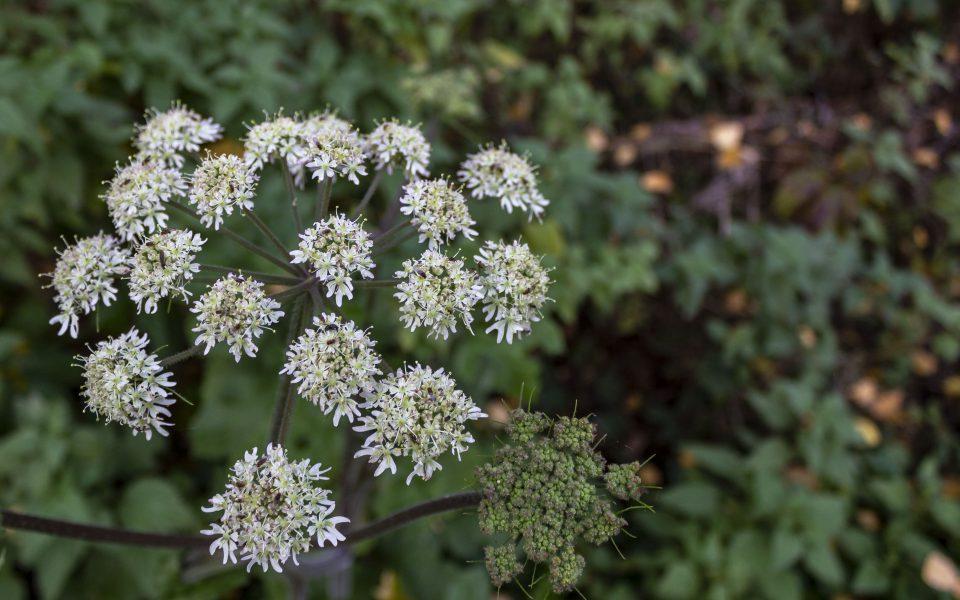 Hintergrundbild - Weiße Blüten im November
