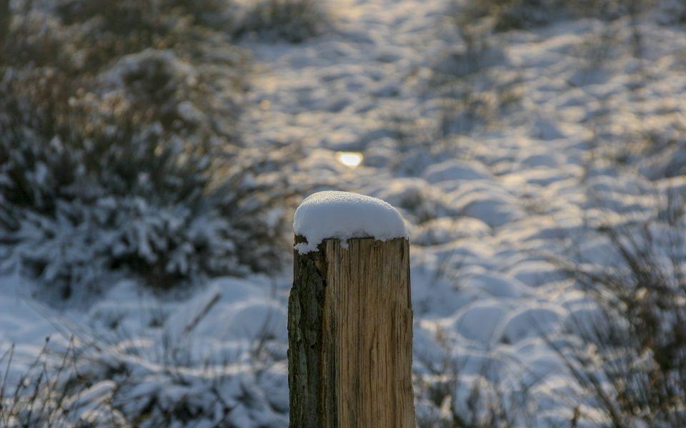 Hintergrundbild - Weidepfosten mit Schnee