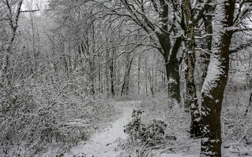 Hintergrundbild - Winter im Wald