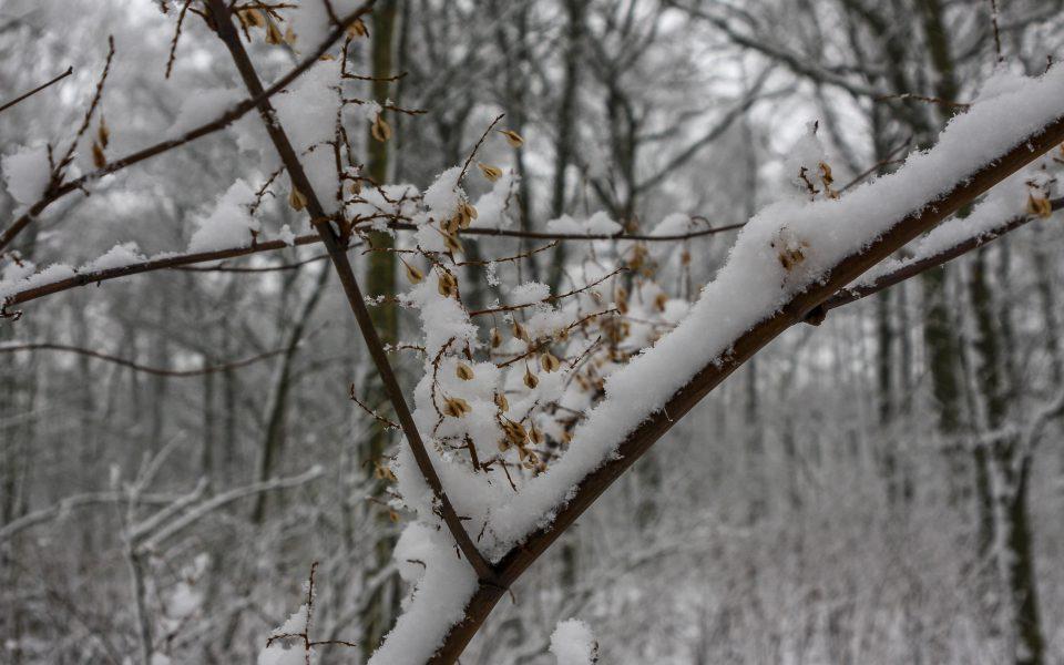 Hintergrundbild - Winterlicher Wald