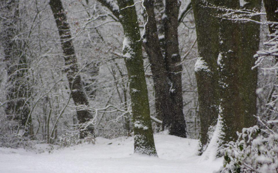 Hintergrundbild - Winterliches Schneetreiben