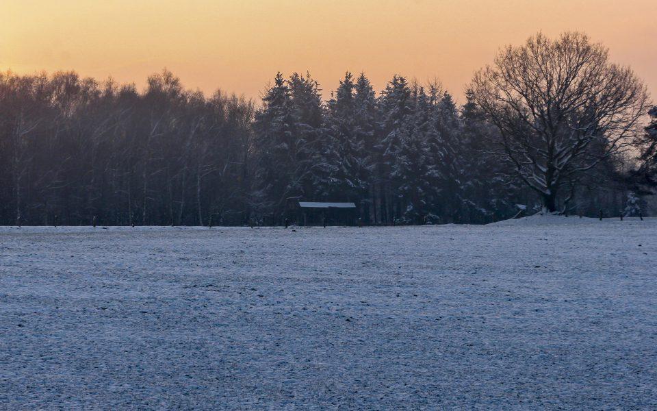 Hintergrundbild - Wintermorgen am Waldrand