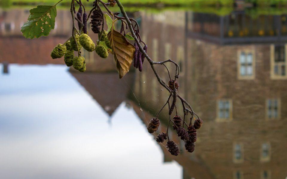Hintergrundbild - Zweig einer Erle im Herbst