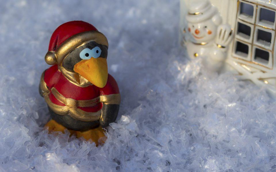 Hintergrundbild - Weihnachten Vogel im Abendlicht