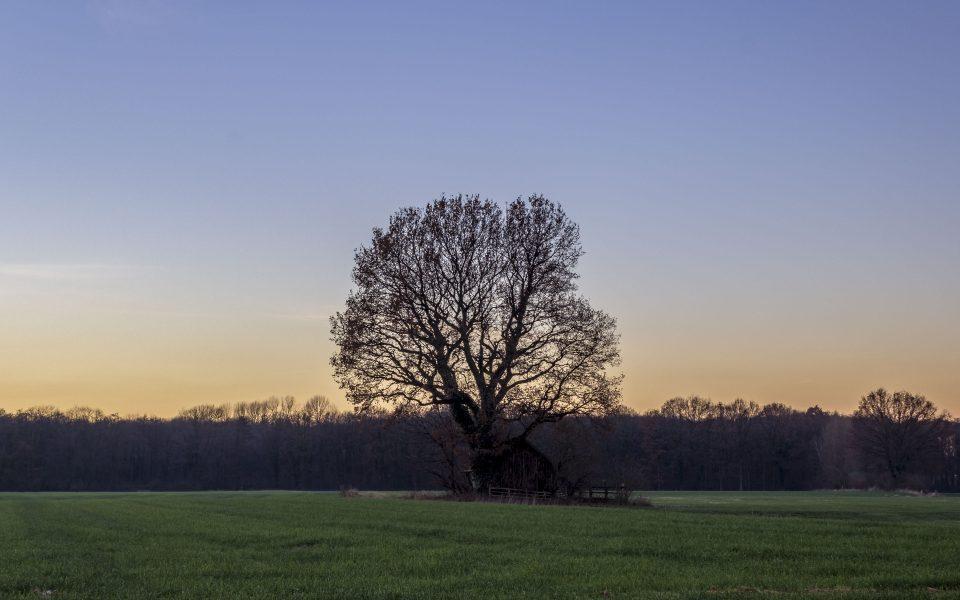 Hintergrundbilder - Baum im Abendlicht