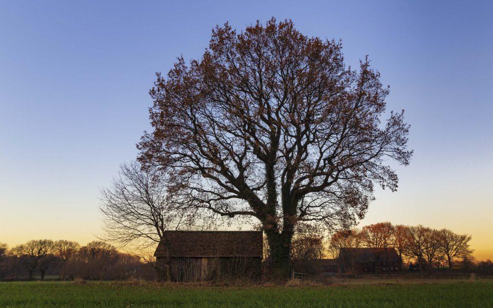 Hintergrundbilder - Baum mit Hütte im Winter
