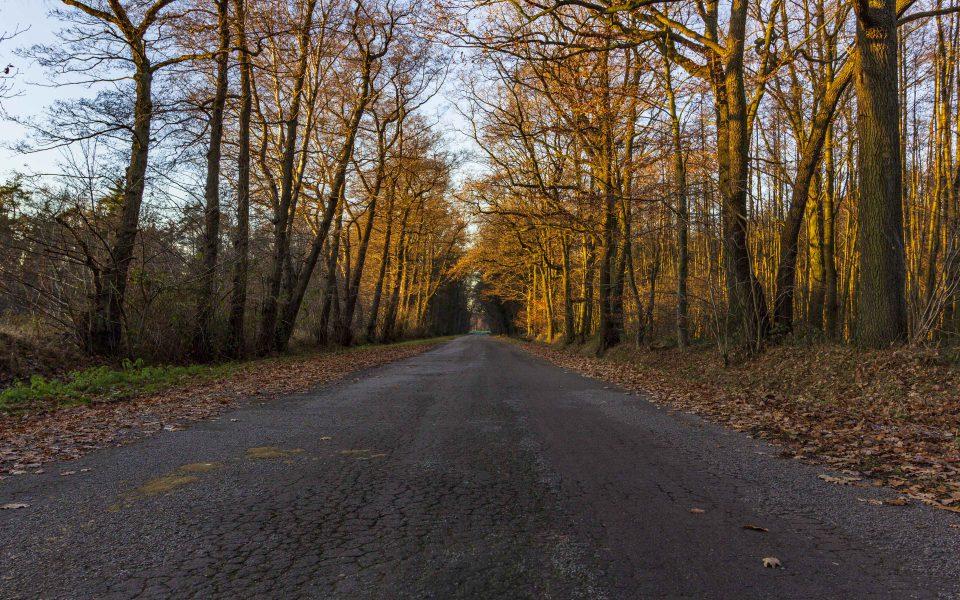 Hintergrundbilder - Straße durch Möllers Bruch