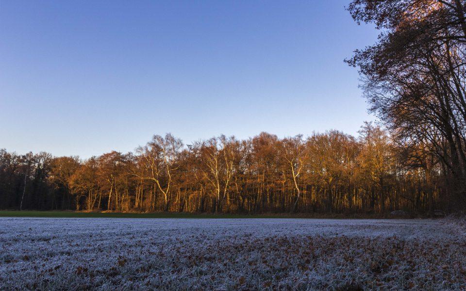 Hintergrundbilder - Winterlandschaft in Gladbeck