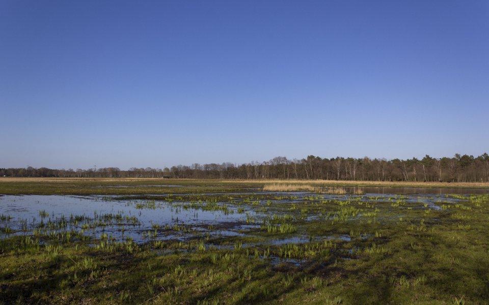 Hintergrundbilder - Feuchtwiesen im Hervester Bruch